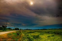 Amer il rumore del vento nel grano... (Gianni Armano) Tags: del photo san italia foto il piemonte sole gianni paesaggio vento alessandria nel giuliano campi nuovo cieli rumore armano amer granostrada