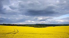 Yellow sea... (radimersky) Tags: panorama west yellow clouds rural landscape four lumix countryside day republic czech farmland hills panasonic micro third pola 43 republika dzien rzepak krajina chmury ty czechy 14mm czeska esko krajobraz esk oblaky kopce zachodnie cechia wiejski wzgrza epka lut bohemi dmcgf1 uprawne malmice rapsed alberitz malmerice