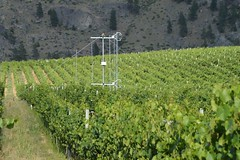 Katabatic flow through vineyard (ubcmicromet) Tags: katabaticflowokanaganvineyardwineclimatetemperatureturbulencecanopy okanagan vineyard climate temperature turbulence wind ubcgeography ubc geography science climatology