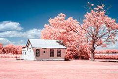 Strawberry Picking on Long Island (willsdad48) Tags: travel 35mm landscape farm longisland produce northfork eastend travelphotography