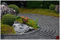 (Damien Douxchamps) Tags: west japan temple kyoto  western   myoshinji kansai japon  ukyo  kinki taizoin   myoushinji ukyou templecomplex     taizouin