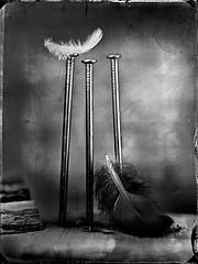 Fallen (Nagy Krisztian) Tags: collodion negative glass 18x24cm plume