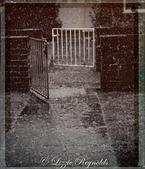 Day 161, 2016, a photo a day. (lizzieisdizzy) Tags: monochrome blackandwhite tinted sepia path gate pathway gateway wall brick rain falling water puddle refection puddles splash reflections raindrops