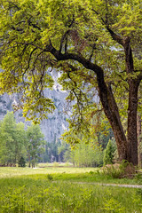 Pathway Arch (Kirk Lougheed) Tags: california usa tree landscape nationalpark spring unitedstates outdoor meadow yosemite yosemitenationalpark yosemitevalley cooksmeadow