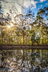 Sunny Afternoon (*ScottyO*) Tags: blue trees winter sky sun lake reflection tree green nature water leaves sunshine clouds forest landscape outdoors pond afternoon dam branches sunny australia adventure foliage adelaide eucalyptus sa burst minor southaustralia hdr parawirra