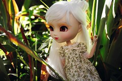 Among flowers (glitteringcastel) Tags: orange white green garden doll dolls dress wig pullip custom pullips custo sacralita