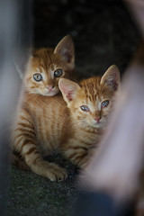 _DSC0314.jpg (Thanasis Maikousis) Tags: cat kitten stray pussycat 500px ifttt