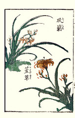 Wind orchid and orange day-lily (Japanese Flower and Bird Art) Tags: orange orchid flower art japan japanese book wind picture orchidaceae daylily woodblock hemerocallis ikeda eisen ukiyo fulva falcata hemerocallidaceae neofinetia readercollection