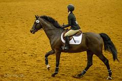 160505_D600_3683.jpg (shirley319) Tags: horse unitedstates lexington kentucky may nationals equestrian 2016 d600 horsecompetition ihsa kentuckyhorsepark