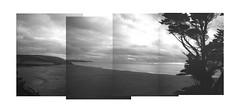 Loe Bar, Helston [Pen EE] (Mr B's Photography) Tags: blackandwhite panorama tree film beach 35mm sand cornwall stitch olympus halfframe helston loebar penee
