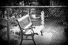 """Joy is the best make up""  - Anne Lamott (Trinimusic2008 -blessings) Tags: summer toronto canada nature fence bench outdoors holga july to hbm 2016 onta trinimusic2008 judymeikle"