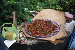 chillis drying in the sun (the foreign photographer - ) Tags: sun thailand bangkok sony tray bang chillis chilis chillies bua drying khlong bangkhen rx100 dscjul102016sony