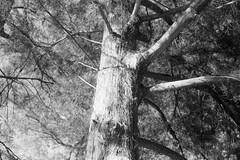 The Junction (Wayman P. Jones) Tags: blackandwhite nature monochrome analog landscape goldenhour olympus35sp ilfordfilm ilford125
