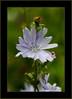 Retour à la vie ! (yvescourt123) Tags: flowerthequietbeauty