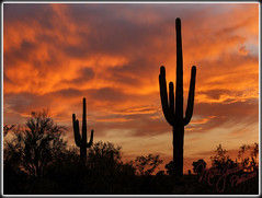 Alright... Just One More Of These (MikeJonesPhoto) Tags: sunset arizona nature landscape bravo photographer ns scenic az professional saguaro 513 3334 mikejonesphoto smithsouthwestern wwwmikejonesphotocom