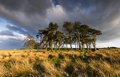 LAST STAND (Steve Boote..) Tags: trees light clouds landscape northumberland northumbria manfrotto rothley northeastengland sigma1020f456exdchsm leefilters ndgrads canoneos7d 09s steveboote elements9 lightroom42