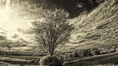 Just another afternoon.... (citrusjig) Tags: sky bw tree church wisconsin work spring driving cross pentax driveby infrared fields toned manualfocus kx clearglass fullspectrum zenitar16mmf28 converteddslr bw090redfilter ruralworld
