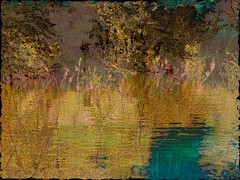 trees inspiration painterly reflection texture mike water... (Photo: flynryon on Flickr)