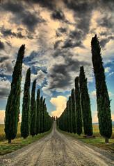 Paesaggio toscano -- Tuscan countryside (Frank//) Tags: italy topf25 canon topf50 topf75 europe italia unesco topv5555 200 tuscany faves toscana topf100 topf200 whs agriturismo castiglione ss2 worldheritagesites poggio poderebelvedere watmooi mrtungsten62 frankvandongen