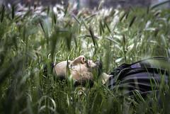 La muerte de Ofelio (GMH) Tags: selfportrait verde green back flat perfil retrato pasto autorretrato acostado ltytr2 ltytr1 ltytr3 ltytr4 ofelio