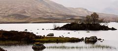 Memories Of Scotland... (akal_flickr) Tags: mountains fleurs landscape scotland highlands et paysages innamoramento