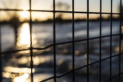 sunbokeh (David Allen's Photostream) Tags: sun fence miltonkeynes flood bokeh stonystratford