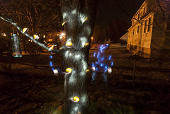 DC3255  DSC_9262D80  Tree w/ Oranges  © 2013 Paul Light (Paul Light) Tags: arlington massachusetts nightlandscape nightwork