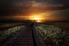 Tracks (Donald Palansky Photography) Tags: railroad flowers flower clouds sunrise sony tracks alpha fineartphotography donaldpalansky