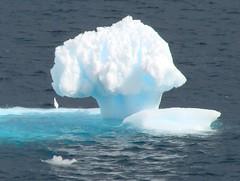Shedding a Tear (ericy202) Tags: ice december antarctica 2006 peninsula growler