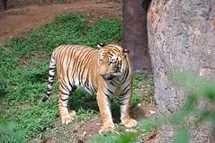 mysore zoo 3