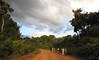 canopywalkway-leonmoore-023