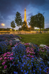 I love Paris (Mathieu Rivrin - Photographies) Tags: city blue urban mars paris france flower tower love tourism monument architecture night fleurs nikon europe tour champs eiffel amour hour capitale nuit arbre couleur ville heure mathieu bleue d800 europ rivrin