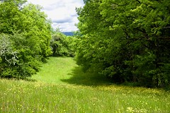 Meadow in Jura Mountains (Kebeard) Tags: flowers wild mountain france green yellow daisies landscape nikon path meadow jura garlic cave signpost buttercups thoiry d610 reculet tiocan