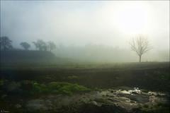 Contraluz en la niebla. (antoniocamero21) Tags: color verde contraluz de arbol san foto sony paisaje catalunya niebla hielo martn sescorts