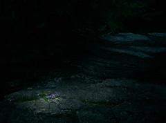 Shocking violets (StephenCaissiePhoto) Tags: flowers contrast rural rocks purple steps hard spotlight limestone grotto dim stark cavern muted phaseone p30 captureone proimaging