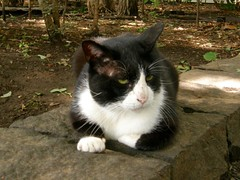 cat (hamapenguin) Tags: animal cat neko  straycat