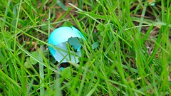 Robin's egg blue (chowdhuryfarah) Tags: blue easter spring egg robins