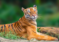 To a Happy New Week (.Randy.) Tags: me friend tiger