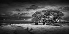 Highland Bayou Lookout (Mabry Campbell) Tags: blackandwhite usa galveston tree june dark landscape photography photo moody texas photographer image fav50 unitedstatesofamerica fineart fav20 photograph infrared 100 24mm fav30 f71 fineartphotography 2016 commercialphotography fav10 fav100 720nm fav40 fav60 galvestoncounty fav90 fav80 fav70 sec tse24mmf35lii highlandbayou mabrycampbell june32016 20160603campbellimg8147