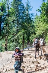 KedarKantha_010 (SaurabhChatterjee) Tags: trek hiking uttaranchal dehradun kedar kedarkantha uttarakhand sankri kedarkanthatrek saurabhchatterjee siaphotographyin trekkinginuttrakhand