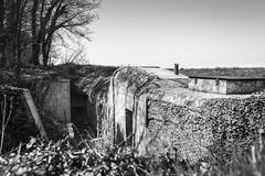 Dans les Terres - Bunker Hillman (Remy Carteret) Tags: blackandwhite bw france canon eos blackwhite noiretblanc wwii battery nb bunker worldwarii overlord ww2 mk2 5d canon5d normandie neptune normandy liberation dday batteries hillman batterie worldwar2 mkii casemates blockhaus markii bunkers wn mark2 casemate jourj libration 3945 19391945 allis murdelatlantique 661944 6644 dbarquement secondeguerremondiale 2eguerremondiale june44 batailledenormandie canoneos5dmarkii batailledefrance collevillemontgomery 5dmarkii canon5dmark2 juin44 oprationneptune 5dmark2 canon5dmarkii marinekstenbatterie canoneos5dmark2 wn17 remycarteret rmycarteret hillmanfortress neptuneopration widerstandnesten niddersistance bunkerhillman widerstandsnest17