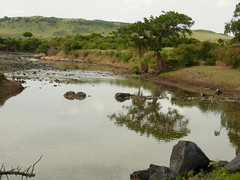 One of the Crossings in the Mara ! (Mara 1) Tags: africa sky tree water reflections river kenya stones hill mara shrubs masai