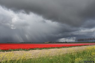 2016-04 Weer kleur met tulpen in het landschap - maar ook wolken (Stellendam/NL)
