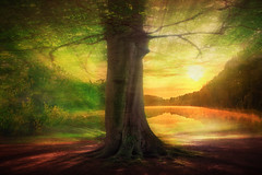 Tree and a lake (radonracer) Tags: sunlight lake tree texture see mood moody motionblur digiart baum