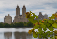 Naturally Urban (Joyce and Steve) Tags: city newyorkcity trees urban brown green water leaves clouds reflections spring pond centralpark reservoir upperwestside