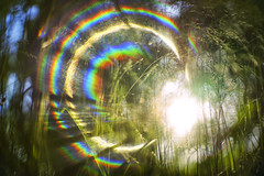 Perfect bliss (petrapetruta) Tags: flare rainbow colorful light summer freelens sun grass