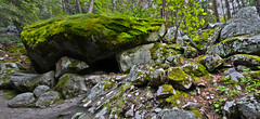 Moss Covered Rocks along Mist Trail, Yosemite National Park (Mastery of Maps) Tags: california park ca trees green nature pine forest outdoors nationalpark moss spring rocks natural yosemite yosemitenationalpark naturalbeauty sierranevada yosemitevalley usnationalpark 2016 misttrail mosscovered