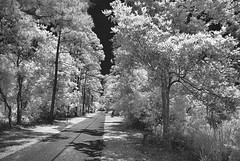 Gulf State Park Trail (Howell Weathers) Tags: trees blackandwhite nature monochrome clouds ir outdoor alabama trail infrared gulfstatepark