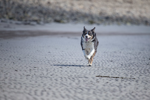 Nell on the run