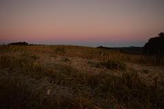 pre-sunrise glow (Leticia Manosso) Tags: winter brazil black gelo girl sunrise countryside frozen outfit gerais glow farm curitiba campo campos campestre